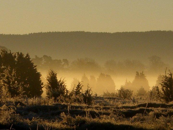 Frostig gryning vid Axevalla hed.